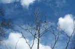 top-of-shadows-tree-clouds1