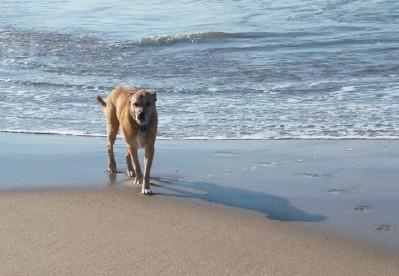 Zephyr at Harbor Beach