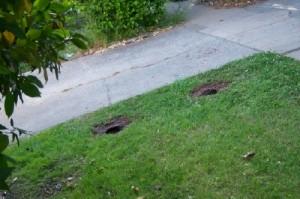 garden holes