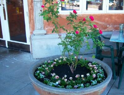 cafe plants2
