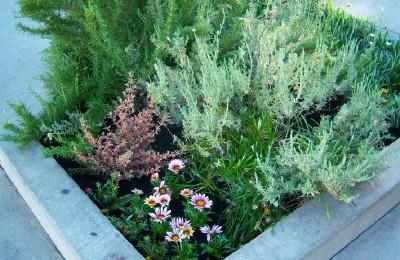 cafe plants3
