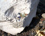 This was a very short beach trip. My small bag of finds. Blue glass & porcelain shards are my favorite.
